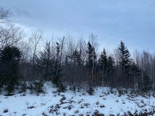 Photo 2: Shore Road West in Delaps Cove: 400-Annapolis County Vacant Land for sale (Annapolis Valley)  : MLS®# 202103088