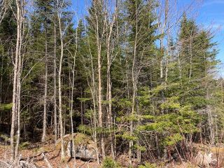 Photo 14: 65 Eaglet Lane in Musquodoboit Harbour: 35-Halifax County East Vacant Land for sale (Halifax-Dartmouth)  : MLS®# 202109854