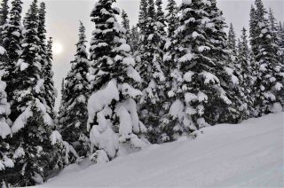 """Photo 8: 217 PRAIRIE Road in Smithers: Smithers - Rural Land for sale in """"Hudson Bay Mountain Resort"""" (Smithers And Area (Zone 54))  : MLS®# R2545464"""