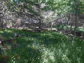 Photo 8: Lots Shore Road in Churchover: 407-Shelburne County Vacant Land for sale (South Shore)  : MLS®# 202011924