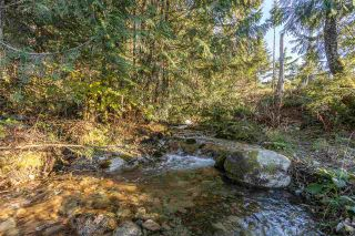 Photo 31: 6120 BROWN Road in Abbotsford: Sumas Mountain House for sale : MLS®# R2542889