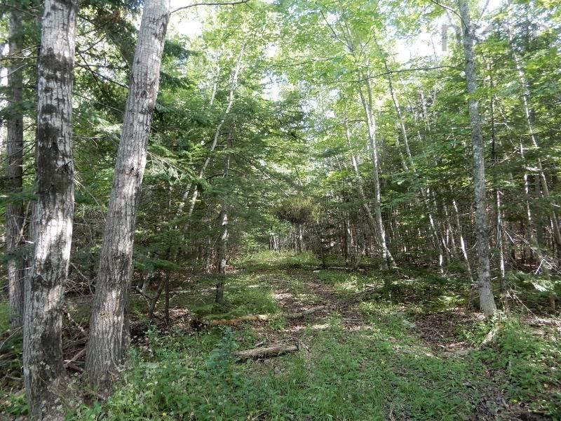 Main Photo: Salem Road in Greenhill: 108-Rural Pictou County Vacant Land for sale (Northern Region)  : MLS®# 202121181