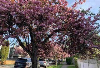 Photo 20: 3620 CAROLINA STREET in Vancouver East: Fraser VE Home for sale ()  : MLS®# R2387252