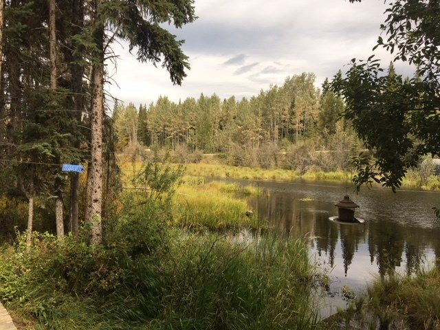 """Photo 17: Photos: 4371 BLACKWATER Road in Quesnel: Bouchie Lake House for sale in """"BLACKWATER - NAZKO"""" (Quesnel (Zone 28))  : MLS®# R2402787"""
