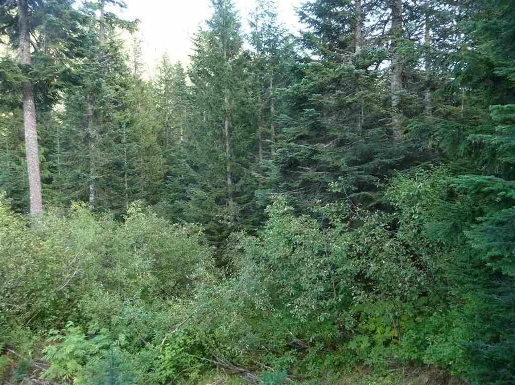 "Photo 3: Photos: 20699 EDELWEISS Drive in Agassiz: Hemlock Land for sale in ""Hemlock"" (Mission)  : MLS®# R2245794"