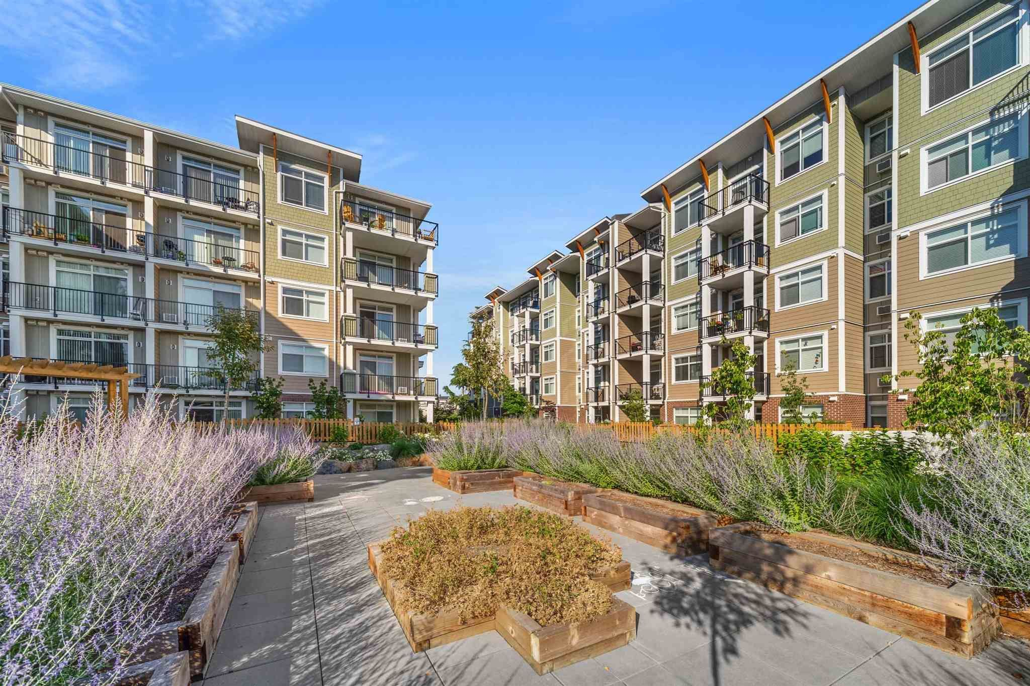 """Main Photo: 215 20696 EASTLEIGH Crescent in Langley: Langley City Condo for sale in """"The Georgia"""" : MLS®# R2598741"""