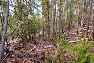 Photo 6: Lot 41 Klondike Trail: Anglemont Vacant Land for sale (North Shuswap)  : MLS®# 10228883