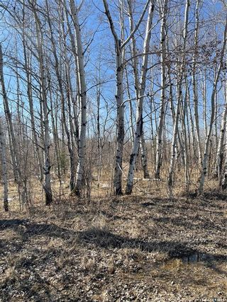 Photo 18: 65 acres land in Preeceville: Lot/Land for sale : MLS®# SK848653
