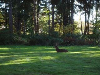 Photo 5: 1577 DINGWALL ROAD: Land Only for sale : MLS®# 245102
