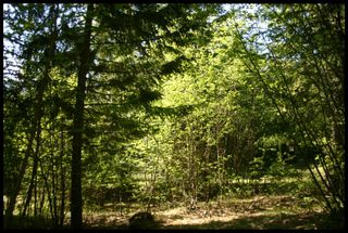 Photo 14: 21 6500 Southwest 15 Avenue in Salmon Arm: Panorama Ranch Vacant Land for sale : MLS®# 10230290