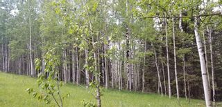 Photo 11: 5.78 Acres Parkins Road: Rural Foothills County Land for sale : MLS®# A1086953