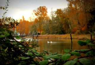"""Photo 20: 106 4955 RIVER Road in Delta: Neilsen Grove Condo for sale in """"Shore Walk"""" (Ladner)  : MLS®# R2302052"""