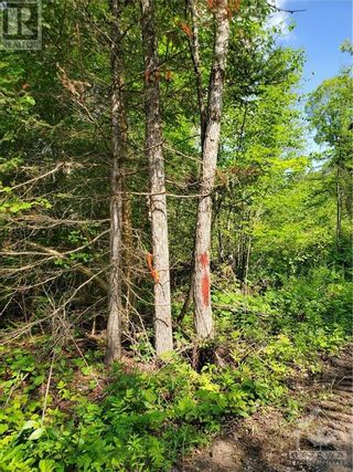 Photo 4: 2600 CLYDE LAKE ROAD in Lanark: Vacant Land for sale : MLS®# 1253879