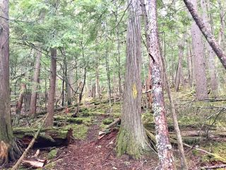 Photo 24: 3,4,6 Armstrong Road in Eagle Bay: Vacant Land for sale : MLS®# 10133907