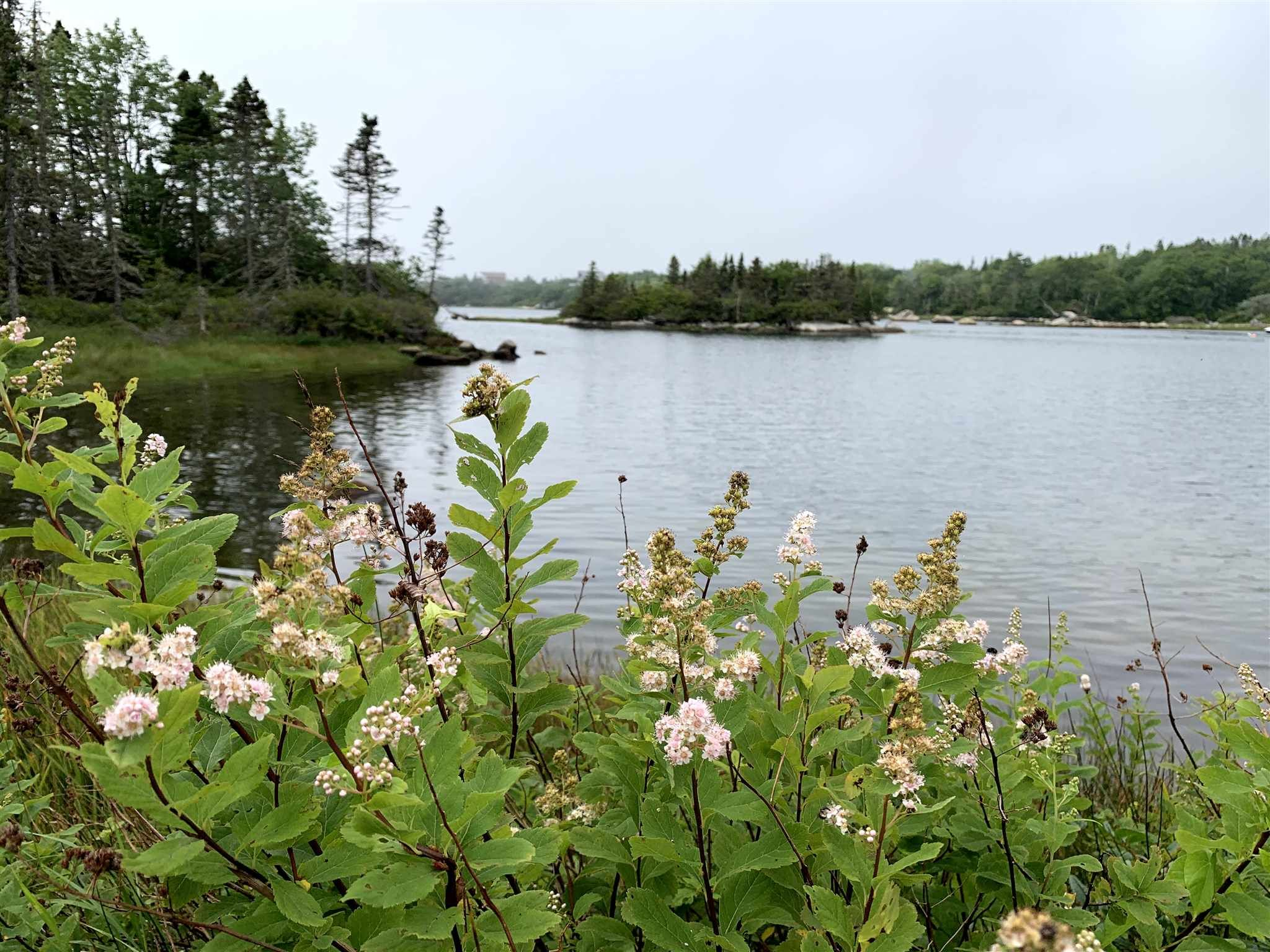 Photo 7: Photos: Lot 5A East Dover Road in East Dover: 40-Timberlea, Prospect, St. Margaret`S Bay Vacant Land for sale (Halifax-Dartmouth)  : MLS®# 202104851