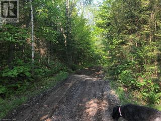 Photo 3: N/A RANEY Road E in Sundridge: Vacant Land for sale : MLS®# 40129602