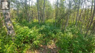 Photo 3: 3820 GOLDMAN ROAD in Quesnel: Vacant Land for sale : MLS®# R2612418