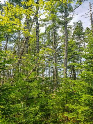 Photo 15: Lot 101 Dorey Mills Road in Clearland: 405-Lunenburg County Vacant Land for sale (South Shore)  : MLS®# 202119645