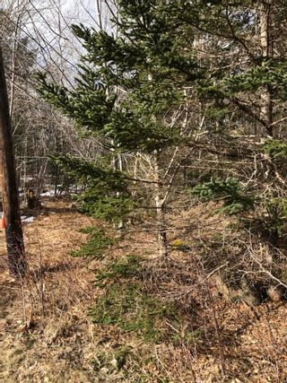 Photo 8: Lot Lighthouse Road in Bay View: 401-Digby County Vacant Land for sale (Annapolis Valley)  : MLS®# 202104918