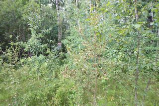 Photo 5: 65 15065 TWP RD 470: Rural Wetaskiwin County Rural Land/Vacant Lot for sale : MLS®# E4257316