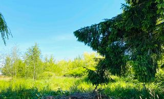 Photo 8: 14511 WESTMINSTER Highway in Richmond: East Richmond Land for sale : MLS®# R2593930