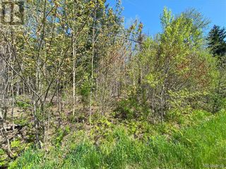 Photo 34: 5264 Rte 770 in Rollingdam: Vacant Land for sale : MLS®# NB058269