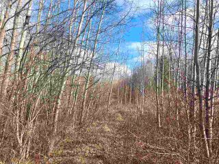 Photo 1: 12002 Twp Rd 605A: Rural St. Paul County Rural Land/Vacant Lot for sale : MLS®# E4239018