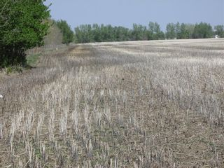 Photo 3: N/A: Olds Land for sale : MLS®# C4185110