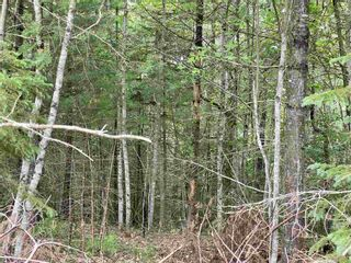 Photo 5: Lot 16 Highway 14 in Windsor Forks: 403-Hants County Vacant Land for sale (Annapolis Valley)  : MLS®# 202104611