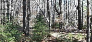 Photo 5: Lot Tupper Street in Milton: Vacant Land for sale : MLS®# 202109601