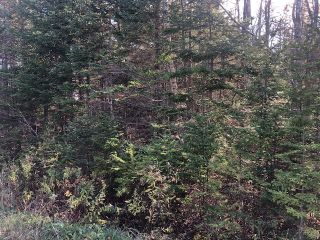 Photo 1: Lot Tracey Road in Brookside: 40-Timberlea, Prospect, St. Margaret`S Bay Vacant Land for sale (Halifax-Dartmouth)  : MLS®# 202022889