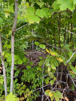 Photo 4: N/A Highway 542 in Mindemoya, Manitoulin Island: Vacant Land for sale : MLS®# 2098500