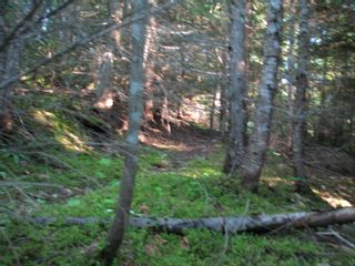 Photo 7: 5049 Ivy Rd: Eagle Bay Land Only for sale (SHuswap)  : MLS®# 10201912