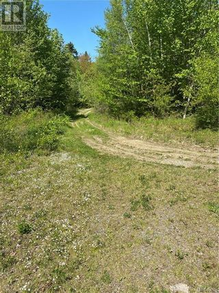 Photo 6: 74.62 Acres Route 127 in Bayside: Vacant Land for sale : MLS®# NB058351