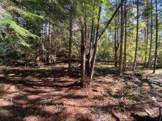 Photo 12: 4665 CRESCENT ROAD in Nelson: Vacant Land for sale : MLS®# 2461363