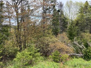 Photo 9: Lot Mushaboom Road in Mushaboom: 35-Halifax County East Vacant Land for sale (Halifax-Dartmouth)  : MLS®# 202114485