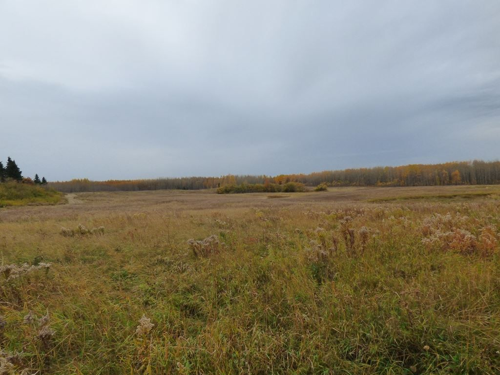 Photo 10: Photos: N1/2 SE19-57-1-W5: Rural Barrhead County Rural Land/Vacant Lot for sale : MLS®# E4217154