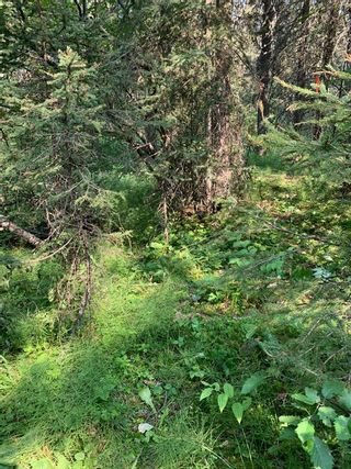 Photo 21: .. None: Bragg Creek Residential Land for sale : MLS®# A1131758