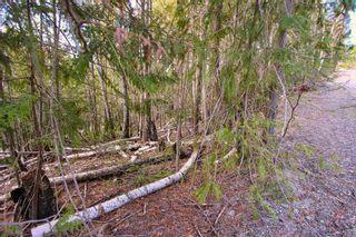 Photo 9: Lot 41 Klondike Trail: Anglemont Vacant Land for sale (North Shuswap)  : MLS®# 10228883