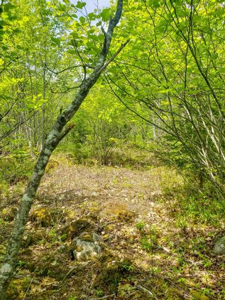 Photo 8: Lot 101 Dorey Mills Road in Clearland: 405-Lunenburg County Vacant Land for sale (South Shore)  : MLS®# 202119645