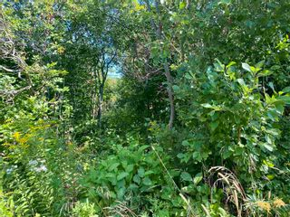 Photo 17: 11.6 acres East Tracadie Road in East Tracadie: 301-Antigonish Vacant Land for sale (Highland Region)  : MLS®# 202122282