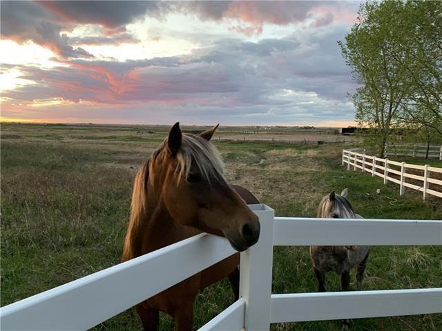 Horse heaven.