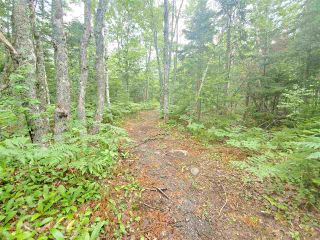 Photo 18: 1775 Trout Lake Road in New Albany: 400-Annapolis County Residential for sale (Annapolis Valley)  : MLS®# 202013496
