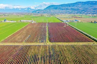 Photo 4: 4081 DIXON Road: Agri-Business for sale in Abbotsford: MLS®# C8035569