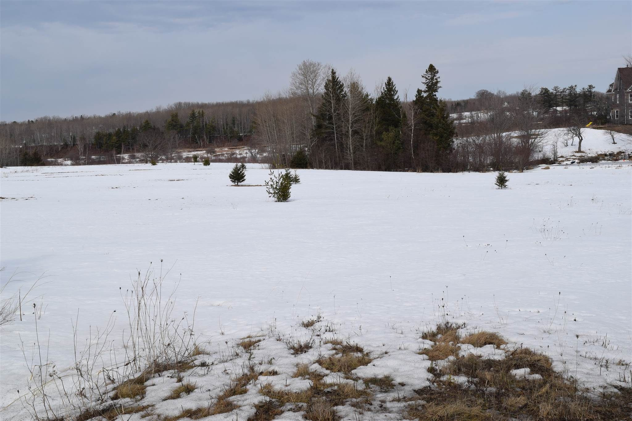 Main Photo: 311 Highway in Waughs River: 103-Malagash, Wentworth Vacant Land for sale (Northern Region)  : MLS®# 202104722
