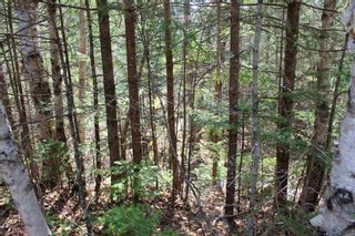 Photo 5: 5 Big Rock Lane in East Chester: 405-Lunenburg County Vacant Land for sale (South Shore)  : MLS®# 202109367