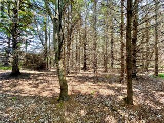 Photo 6: lot 10-1 Route 955 in Murray Corner: Vacant Land for sale : MLS®# M135241