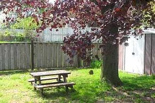 Photo 8:  in TORONTO: Freehold for sale (E10 - Scarborough)