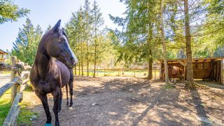 Photo 53: 2939 Laverock Rd in : ML Shawnigan House for sale (Malahat & Area)  : MLS®# 873048