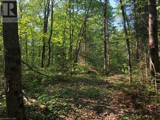 Photo 15: N/A RANEY Road E in Sundridge: Vacant Land for sale : MLS®# 40129602